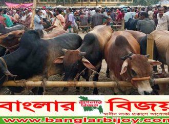 বুড়িগঞ্জ কোরবানীর পশুর হাট জমজমাট